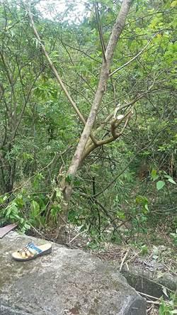 鋸樹失足摔落8米高擋土牆  阿嬤傷重昏迷