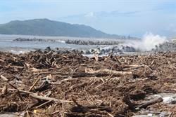 花蓮海灘堆漂流木  20日起開放撿拾