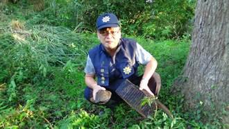 員警營救「柴棺龜」險遭龜殼花蛇吻