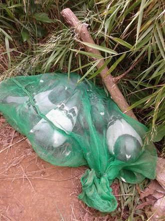 淡水警登山迷途  意外破擄鴿案