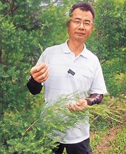 屏東農友馴化澳洲茶樹 萃取精油