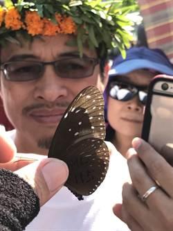 茂林紫斑蝶先遣部隊報到 賞蝶季開跑