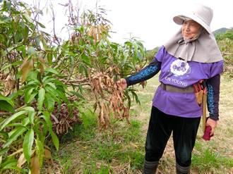 雜草影響農損判斷 枋山鄉公所:沒這回事