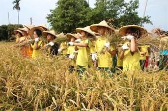工藝稻草文化節 小朋友體驗割稻
