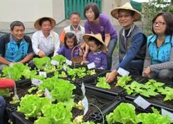 幼稚園菜圃採收 城市小農夫體驗農耕樂