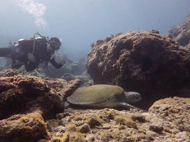 小琉球因不受東北季風影響,冬天水溫宜人,成了近來遊客喜愛的潛水新點。(廖姓遊客提供)