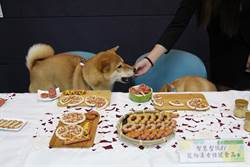 大葉大學研發紅藜低GI食品 寵物遠離三高