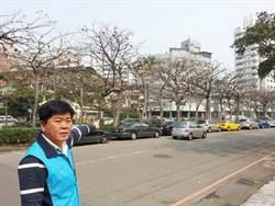 中市府將移植6000棵黑板樹 補植台灣原生樹種