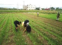 草療茄荖山莊的現代農夫 讓荒地變菜園