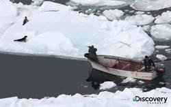 Discovery《海豹悲歌》 公開捕獵殘酷畫面