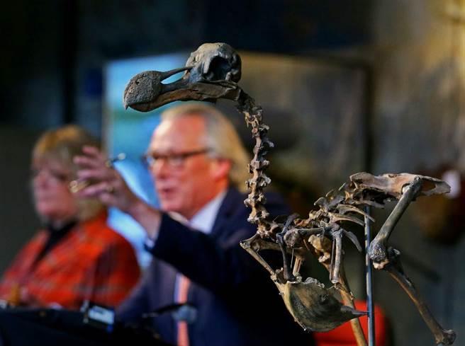 絕種300多年的渡渡鳥,如今最完美的標本以高價拍出。(圖/美聯社)