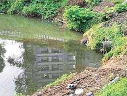 汐止金龍湖 疑遭偷排汙水