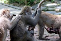 幫農民趕獼猴 高市將訓練流浪犬成「驅猴犬」