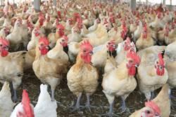 憂禽流感爆發 農委會提高防疫等級