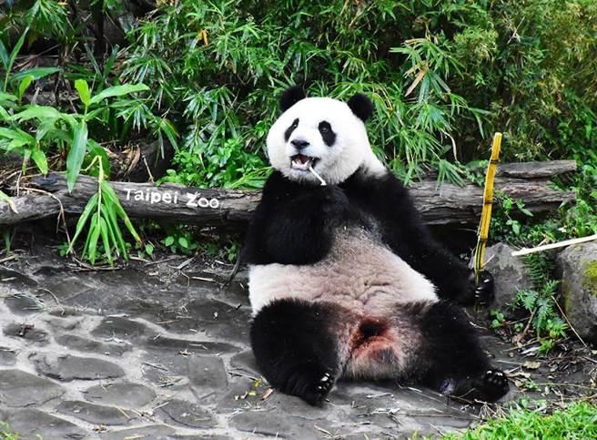 網友認真提問,得到的答案卻讓人哭笑不得。圖/取自木柵動物園臉書