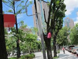 中市規畫11處滑板運動場地 拚2020東京奧運