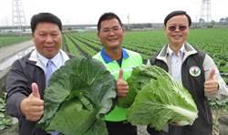 彰化竹塘34歲青農蔡宜修 獲選2017全國十大神農