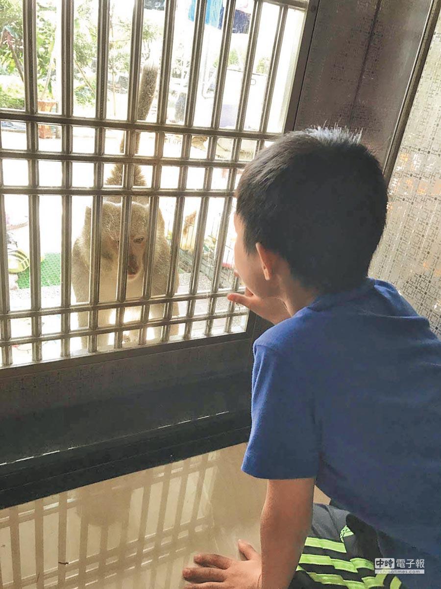 民眾緊閉家門防止野生獼猴入侵。(林雅惠攝)