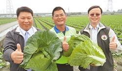 竹塘青農蔡宜修 榮獲神農獎