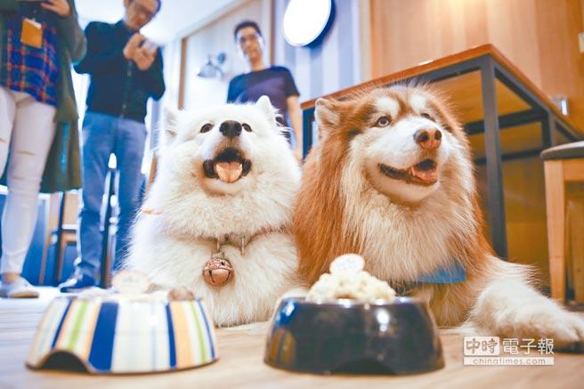 貼有「藍色」友善動物的貼紙,就代表非寵物業相關業者,包括咖啡廳、餐廳等,歡迎民眾帶寵物入內消費。 (柯伶穎攝)