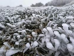 玉山今晨-3.5℃低溫 主峰北峰有霧淞