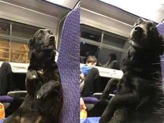 隔壁乘客是汪星人 坐火車模樣無辜讓人噴笑