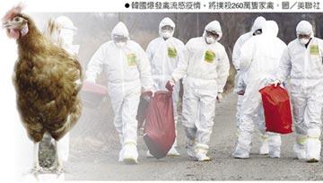 亞洲爆禽流感 韓雞蛋飆漲