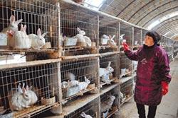 大陸年吃5億隻兔 川人占3億