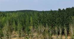 研究:大陸防護林工程對治霧霾有效
