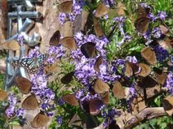 蝶舞茂林 生態與觀光的饗宴