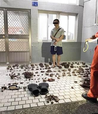 為了3萬元 2男盜採151株活體珊瑚