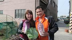 就愛紫色浪漫 愛妻青農種出紫玉白菜