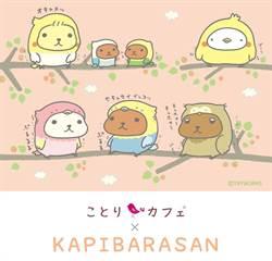 蹦出最可愛的水豚君♥陪你一起喝咖啡×小鳥咖啡廳