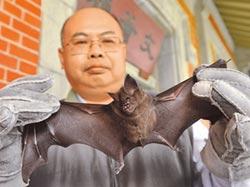 蝙蝠吃多了重金屬 找不到回家路