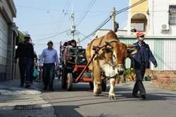 安南區辦「南興過好年」 邀大家體驗傳統農村文化
