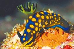 潛水賞魚、看龍王鯛 虛擬實境遊綠島