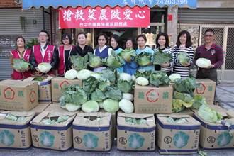 市議員朱暖英搶救高麗菜農 捐600公斤做愛心