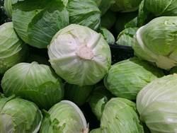 防胃潰瘍、養顏美容 高麗菜價格跌更要多吃!