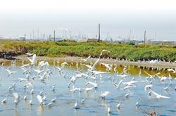 台塑造林145萬株 供候鳥棲息