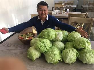 不送高麗菜 這個業者送故鄉萵苣