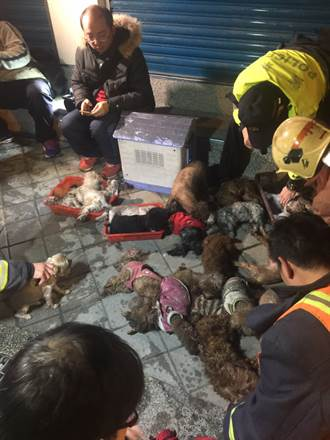 寵物店大火  警消人工呼吸救回毛小孩