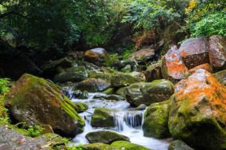 春節出遊!北市大溝溪森林祕境 瀑布洗滌心靈