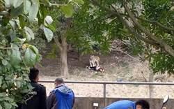 (有影)動物園老虎咬人事件 遊客生日變忌日