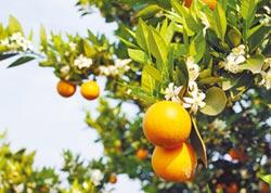 橘子富含維他命C 冬季吃有6禁忌