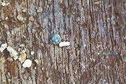 出土文物300件 蜻蜓眼異域色彩濃