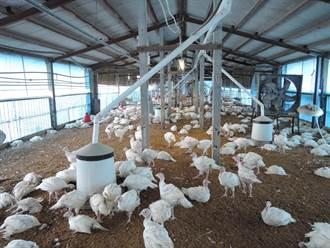 H5N6禽流感東部先發現 專家質疑病毒早進入台灣