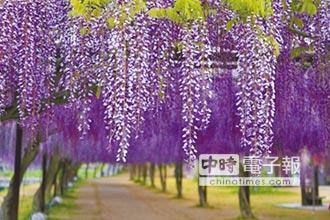 和氣町沐浴紫色浪漫