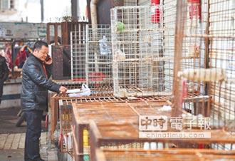 北京現雞年首例H7N9 患者病危