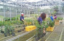 農業局開設溫室設施搭建講座開放報名