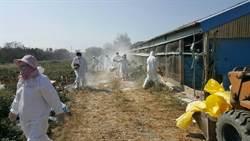 防隱匿禽流感疫情 雲林縣從化製廠反向勾稽